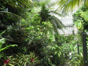 barbican conservatory